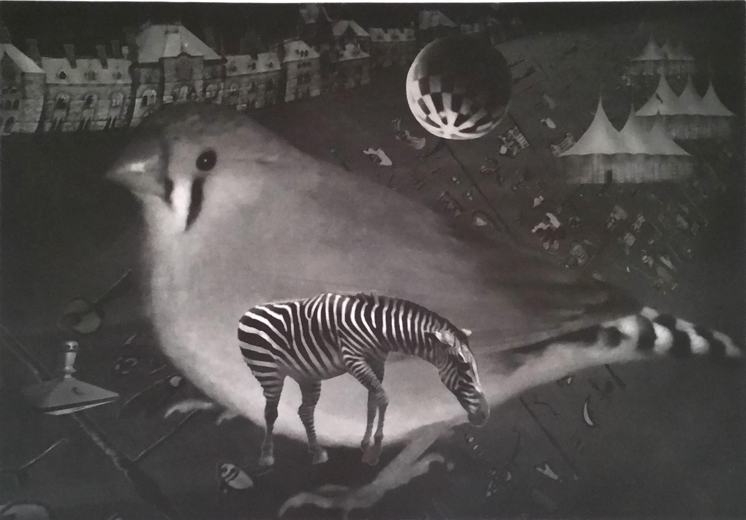 Snowbird and Zebra  22.5 X 30 inches