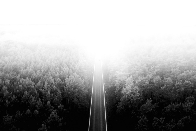 road-fog-woods-where-light-plays.jpg