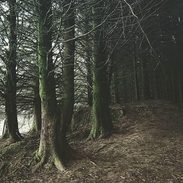 On the fringe of the forest. . . . . . #rural_love #wonderfulplaces #artofvisuals #folkscenery #lifeofadventure #thefolkpr0ject #rsa_outdoors #world_lenz #moodygrams #fiftyshadesofdarkness #friendsinshadowandlight #deepestvisuals #PhotosOfEngland #rsa_ladies #sombrescapes #forest #artistfound #gloomgrabber #all_colourshots #wanderingteam #follow_the_grey_sky #tv_allnature #quest_4_nature #visual100 #rsa_dark #fiftyshades_of_darkness #woodland #masters_of_darkness #darkphotography #sombreexplore
