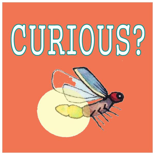 What's up with the firefly? Click Here.