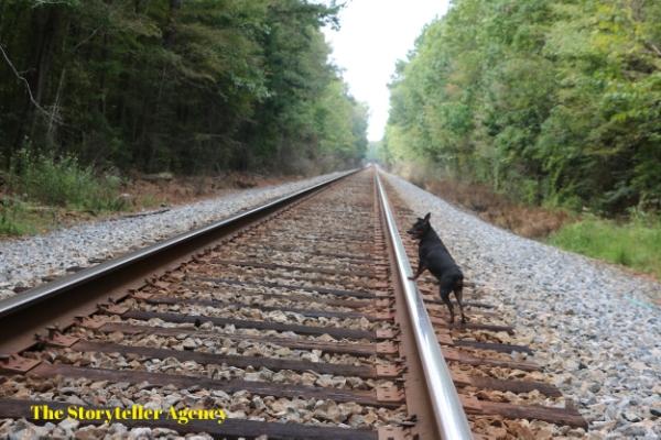 Dexter Train.JPG