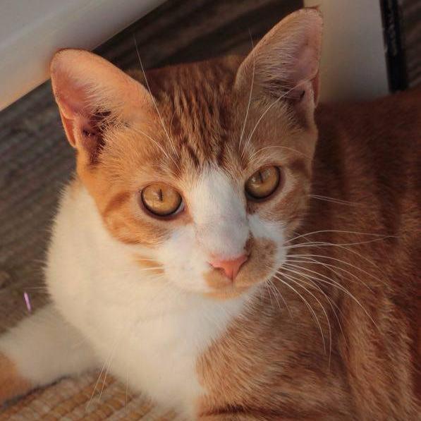 Munchkin, one of the refuges many rescue (c/o Alaqua Animal Refuge Facebook photos)