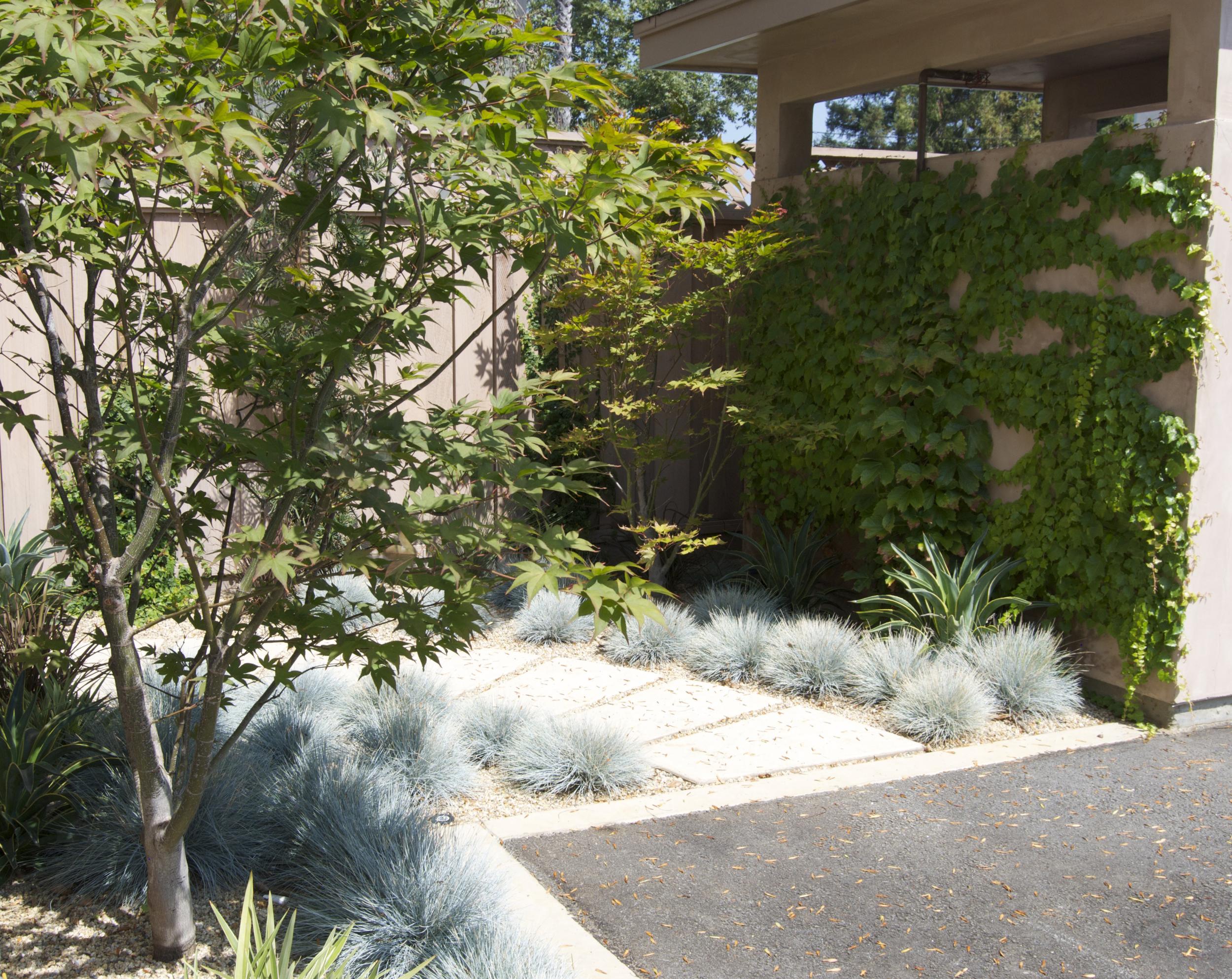 TNS los altos side garden