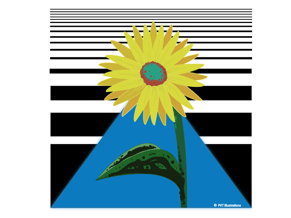 Sunflower competition submission.