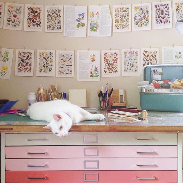 💕🐱💕 This month marks 2 years of home ownership, and I've only just figured out what to do with my oddly shaped bookbinding space. 💕 Of course these pink ombré flat files are staying, but due to space constraints, I'm replacing the top (an ancient door dI found in an old barn). The floral pages will also make an appearance, just in a more dramatic way. 💕 The sun is out, windows are open, and we spent all day building my new desk and work surfaces. I can't wait for this room to be done. I am finally feeling inspired. I am itching to create. #kittycatstevensstudio #olivesayshello