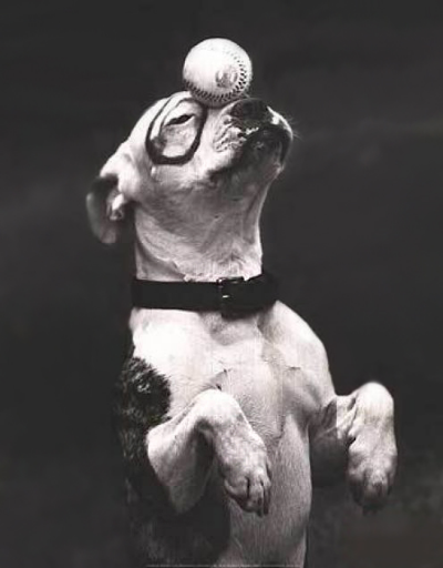 –           Pete the pup, The Little Rascals(1930's)