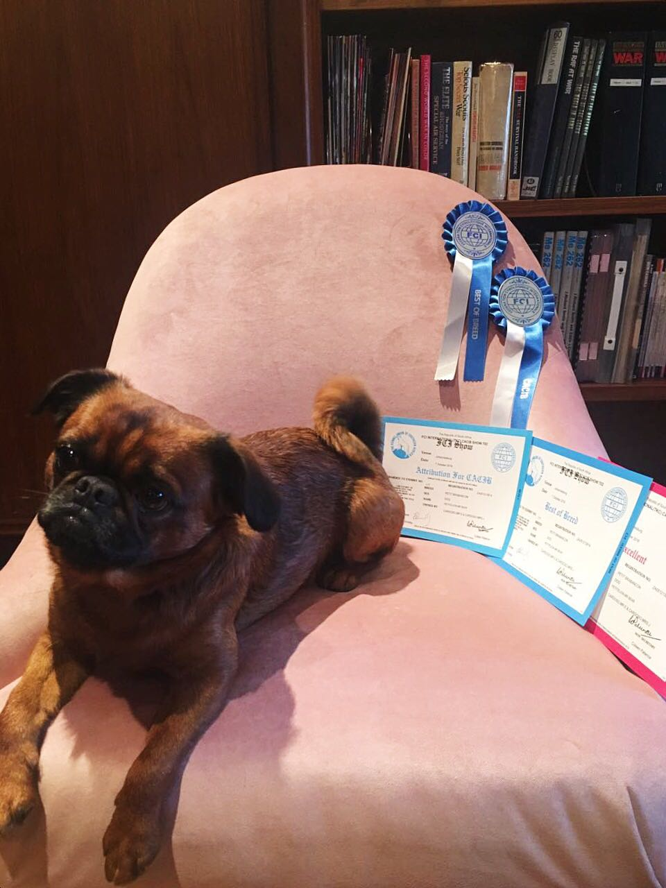 MR BEAR - FCI Show, - Excellent, Best of Breed & CACIB  TKC Show - Best of Breed & CC.