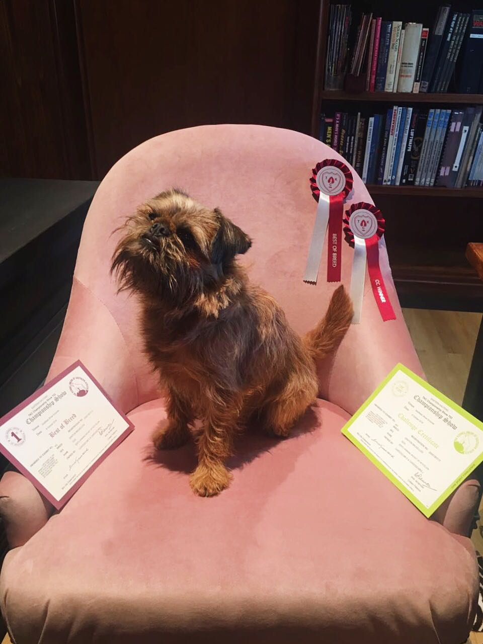 WINNING WICKET - TKC Show - Best of Breed & CC