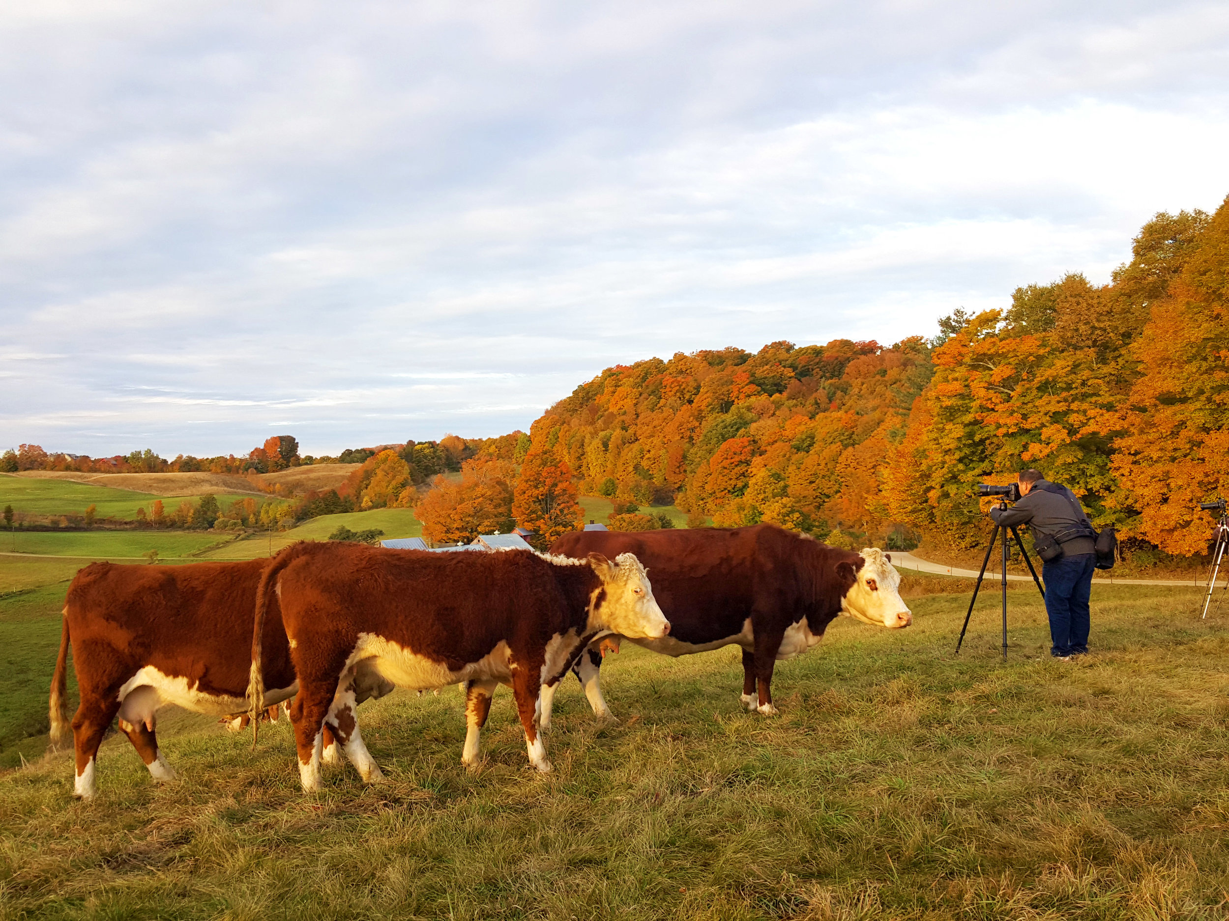 Look at these curious cows!