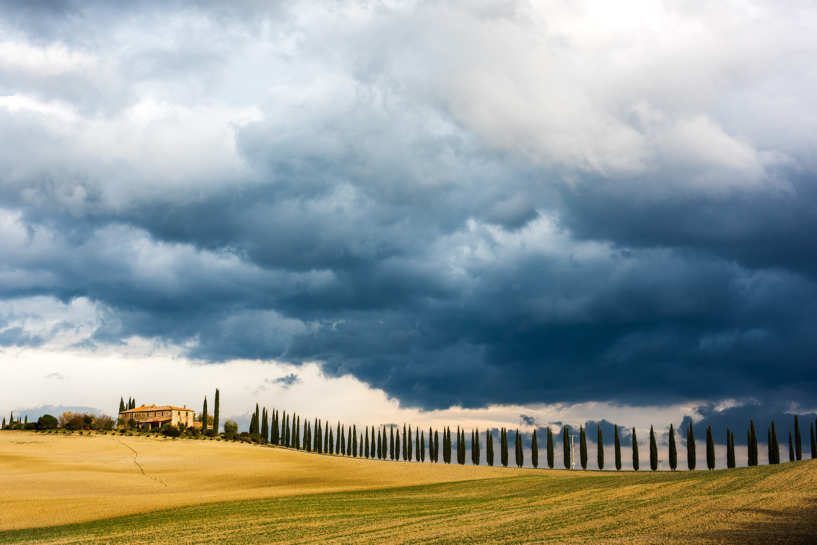 Oncoming storm & Cypress rows