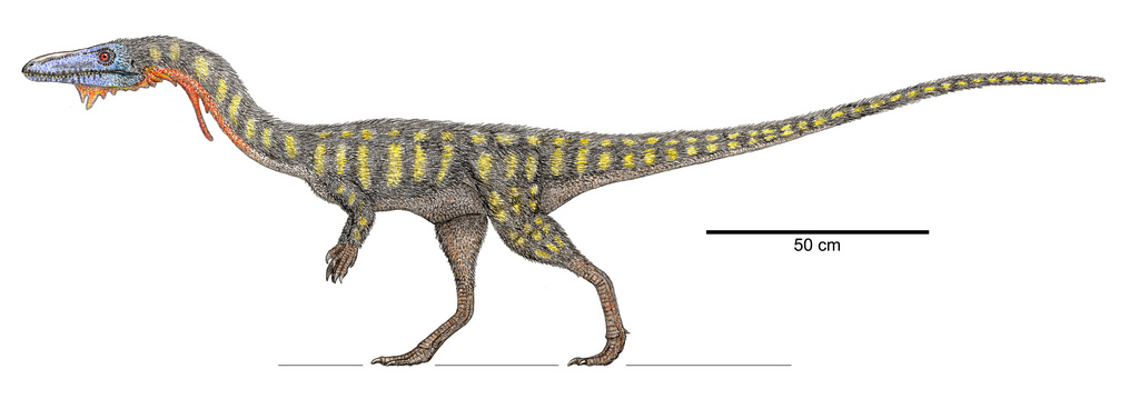 The  Coelophysis  - crowning jewel of PeFo