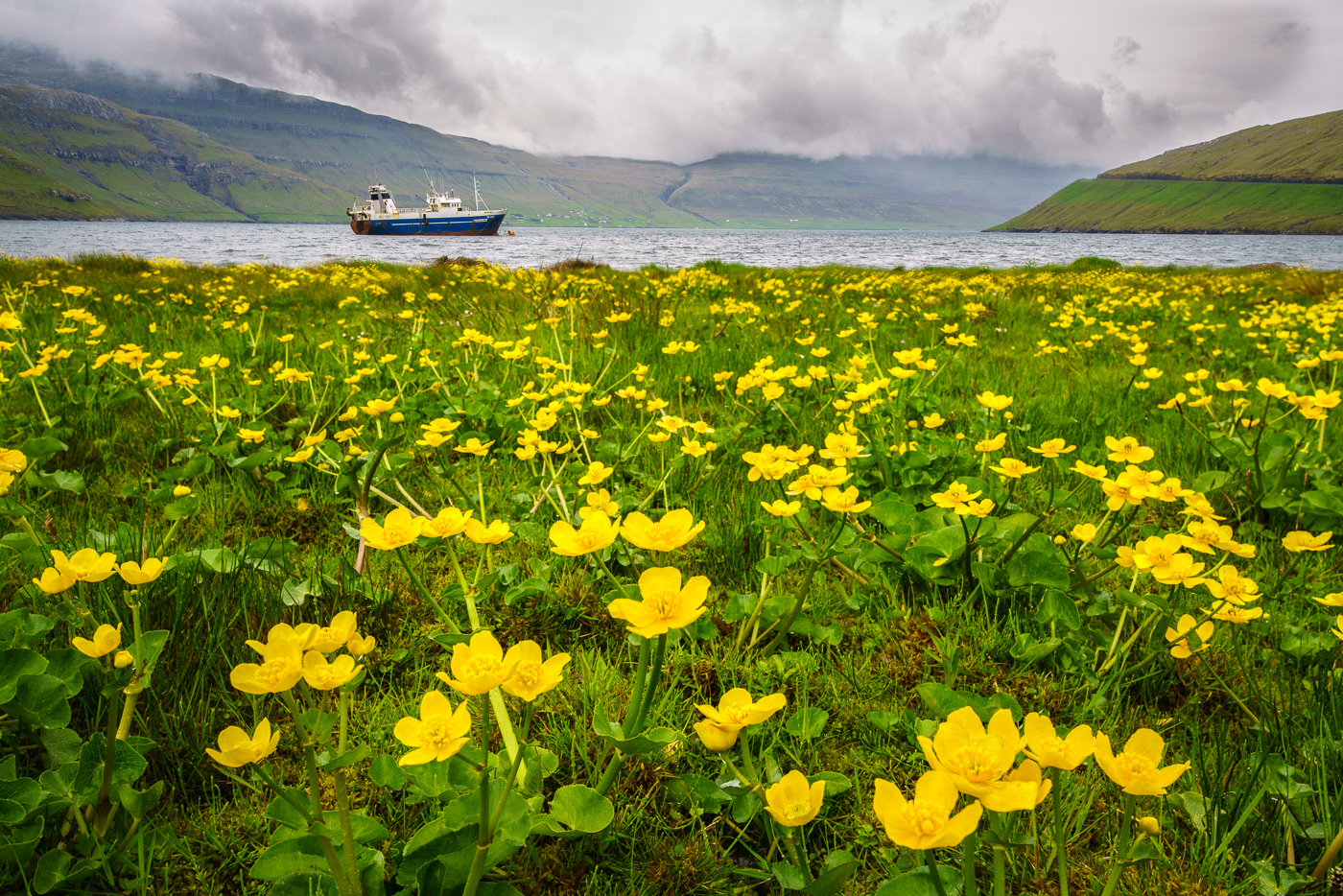 Buttercups and Boat.jpg