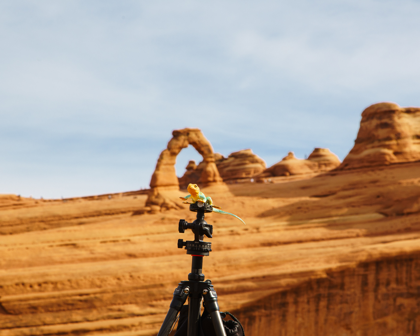 Kanab practicing using the tripod at Delicate Arch, Arches National Park, Utah.