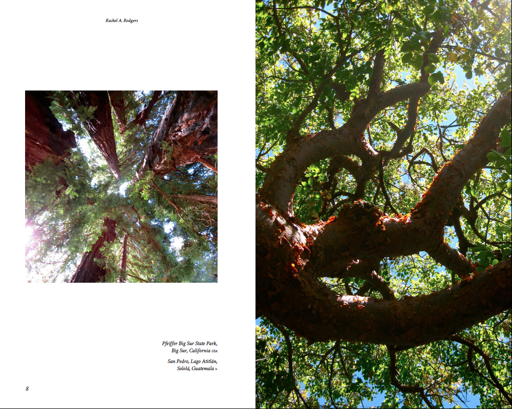 The Nature of Trees Pdfs-sample 5.png