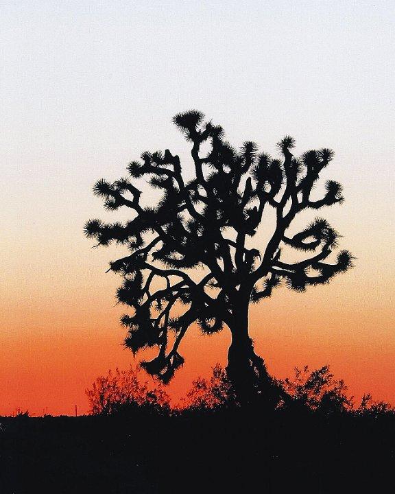 desertsunset2.jpg.jpg