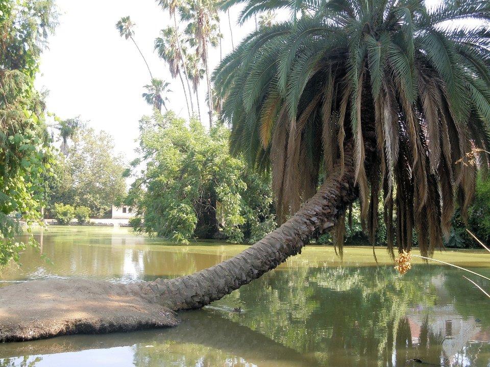 treeleaningoverwater1.jpg.JPG