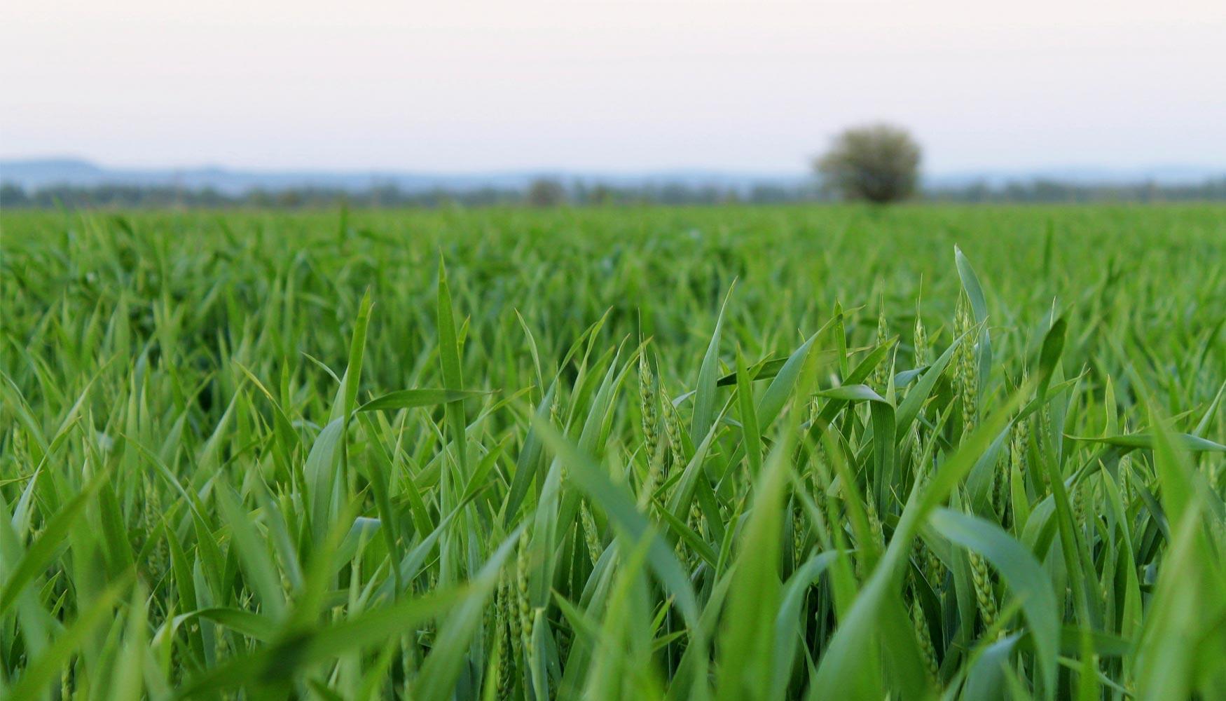 Fertilizer Chile