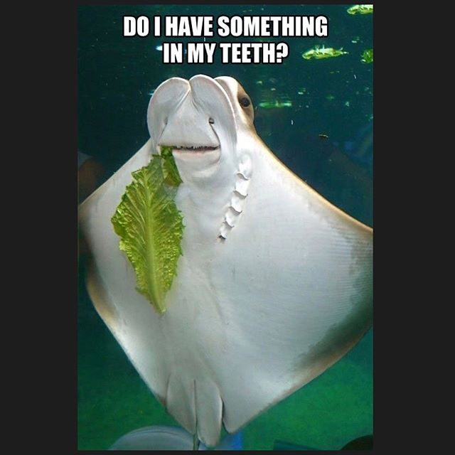 Yes, manta ray, you sure do. Little to the left. #mondayfunday #dentalhumor
