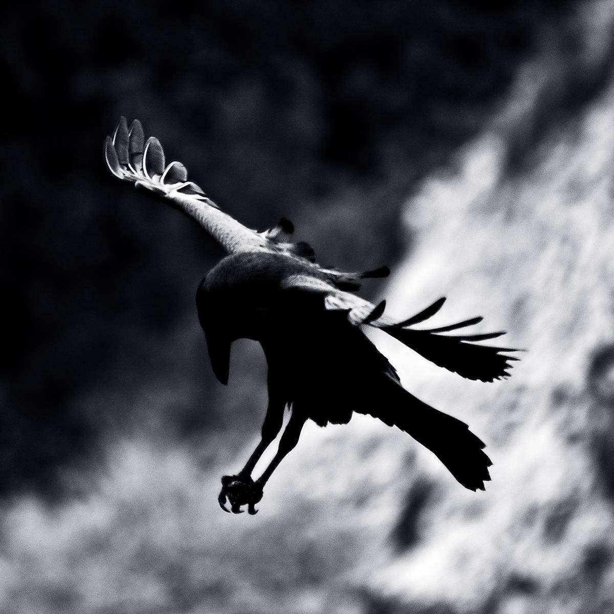 blackmessenger1.jpg