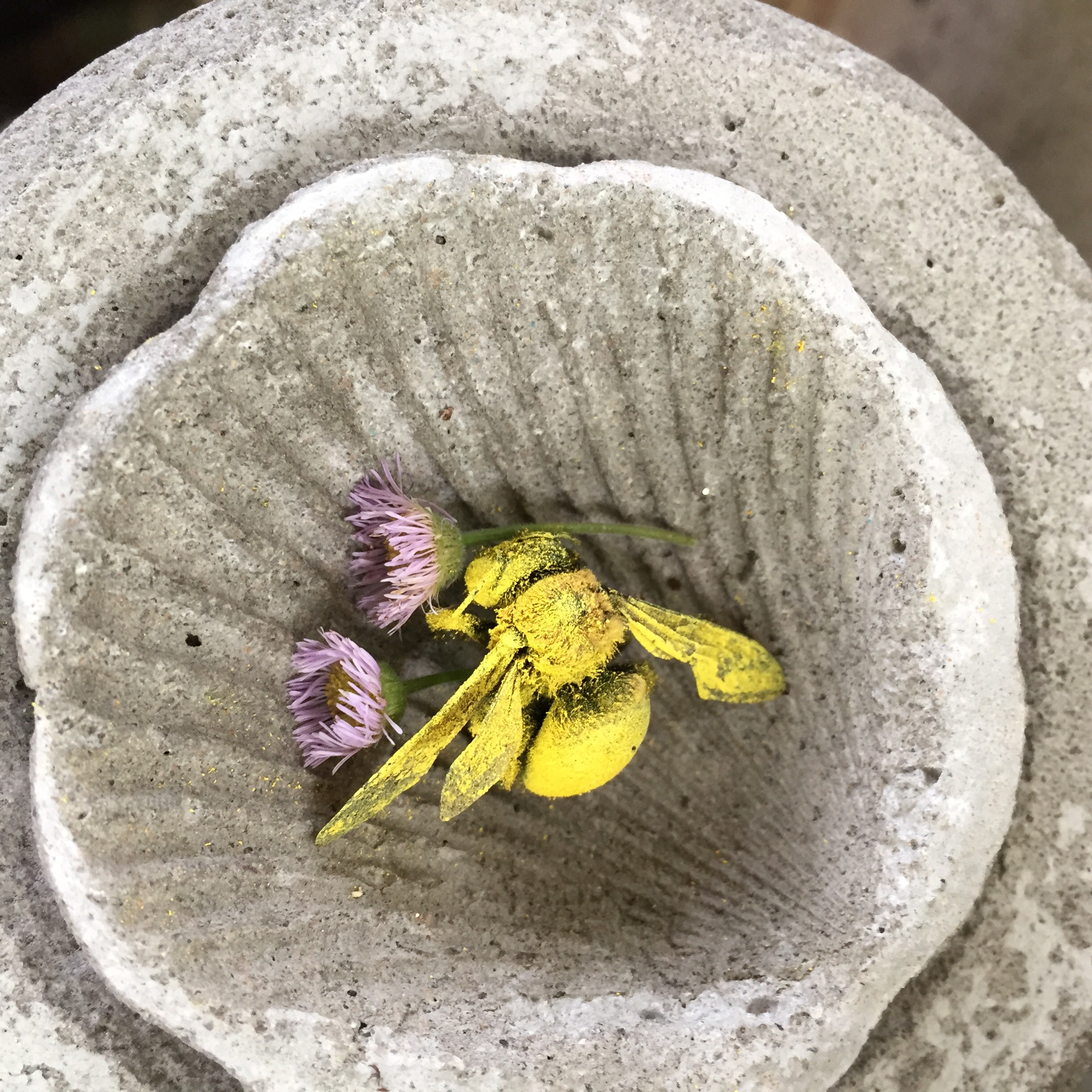 mixed dry media + concrete vessel, paint dusted insect