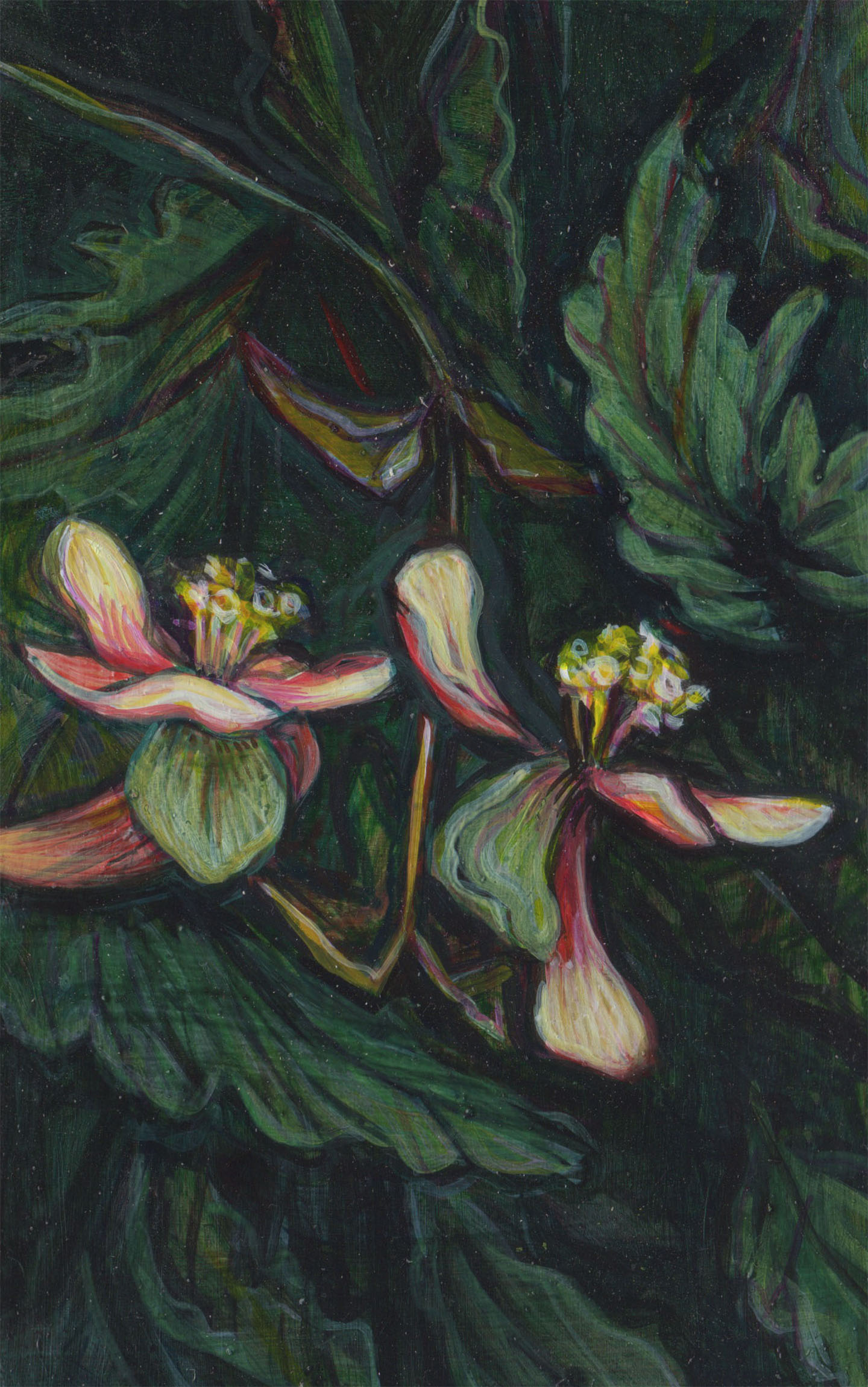 "(su1516) begonias, 5 3/4"" x 3 5/8"", water-based media on panel, 2015-2016"