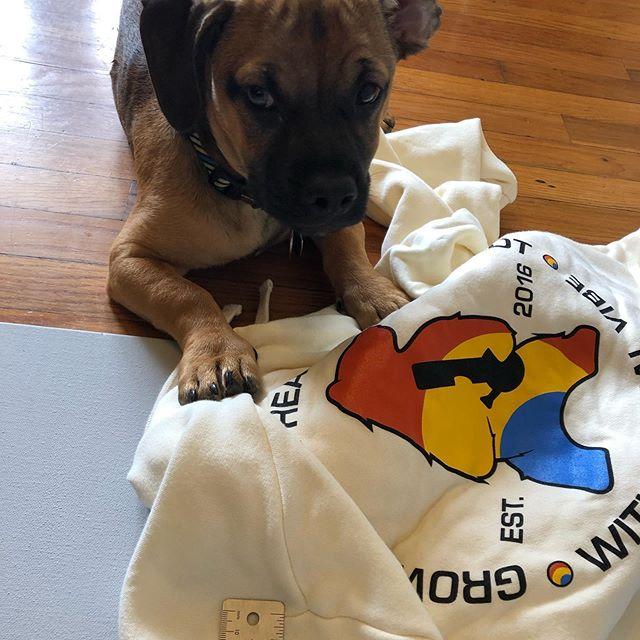 Apparently Drax thought I needed help and supervision taking sample photos of @humboldtkinefarms swag. #brandambassador #branding #officedogs #designiseverywhere