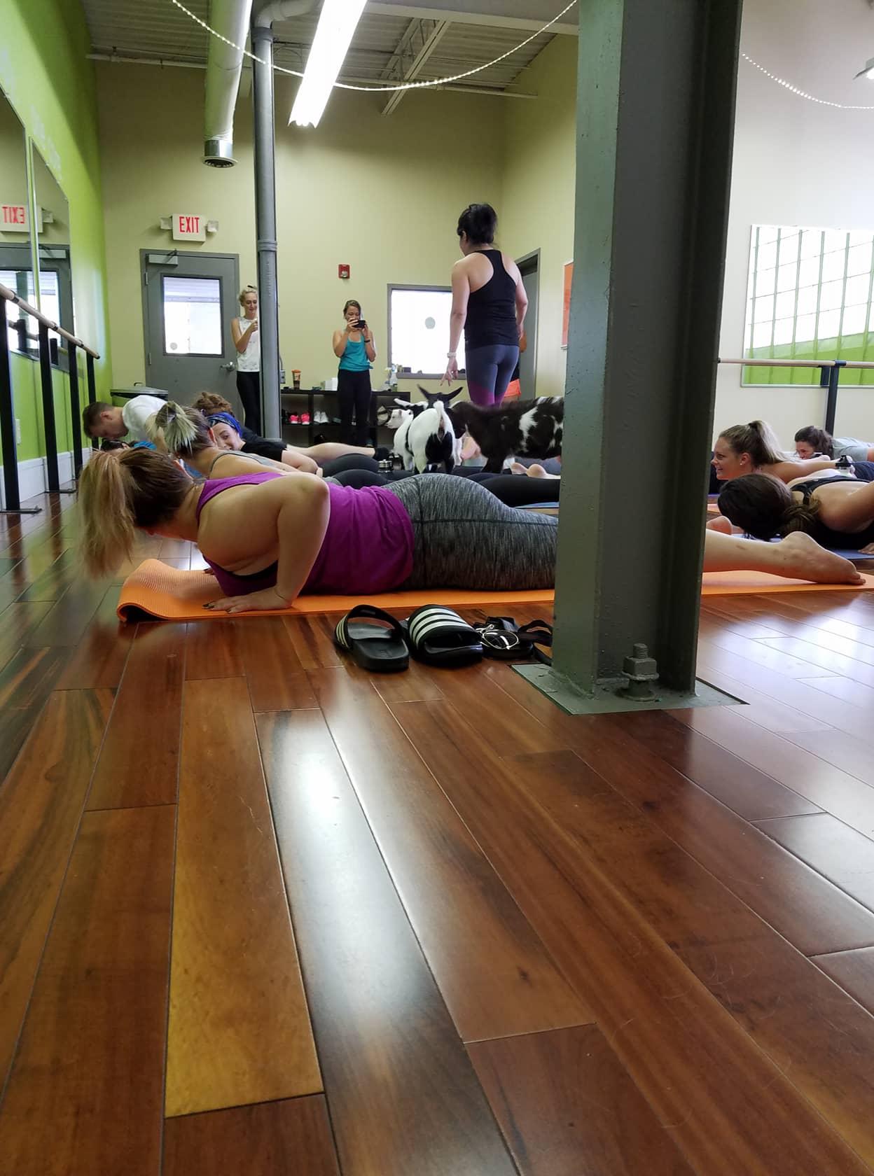 Cincinnati and Covington Corestrong Goat Yoga Class 2.jpg