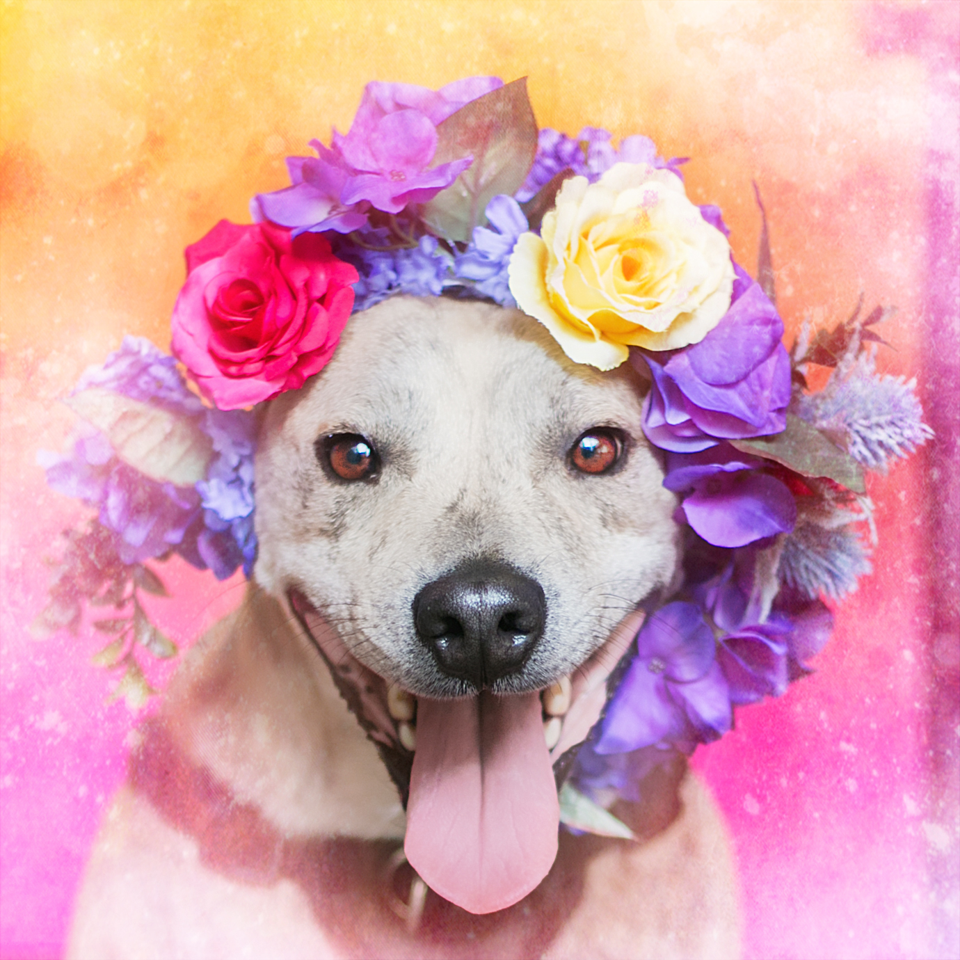 Dog Photo booth by Say Yes To Jess Cincinnati Photographer