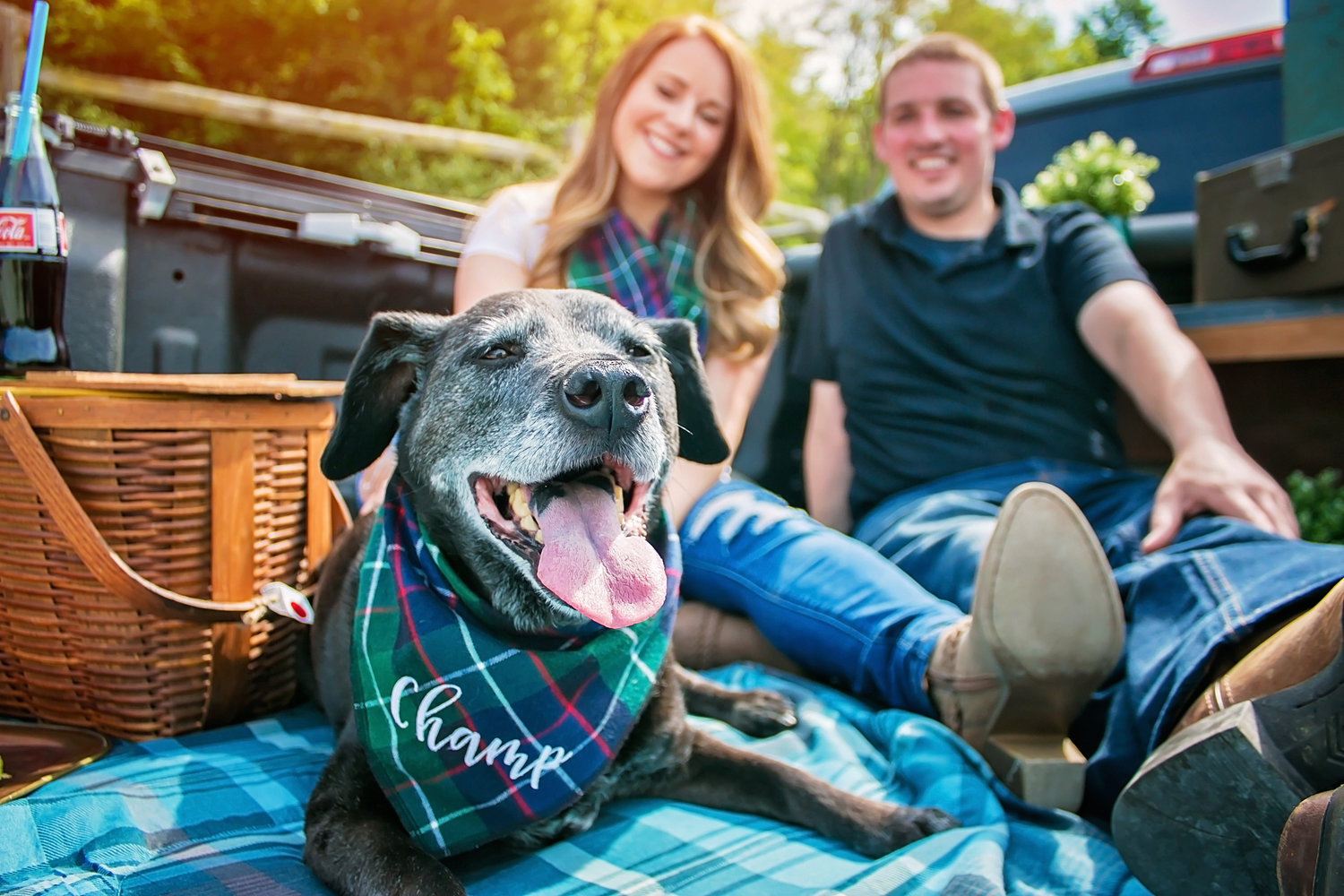 Pet Portraits by Cincinnati Family Photographer Jess Summers of Say Yes To Jess