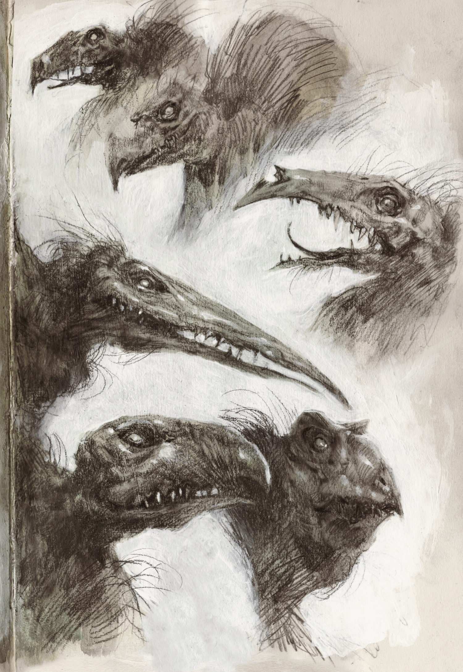 sketchbook_skeksis.png