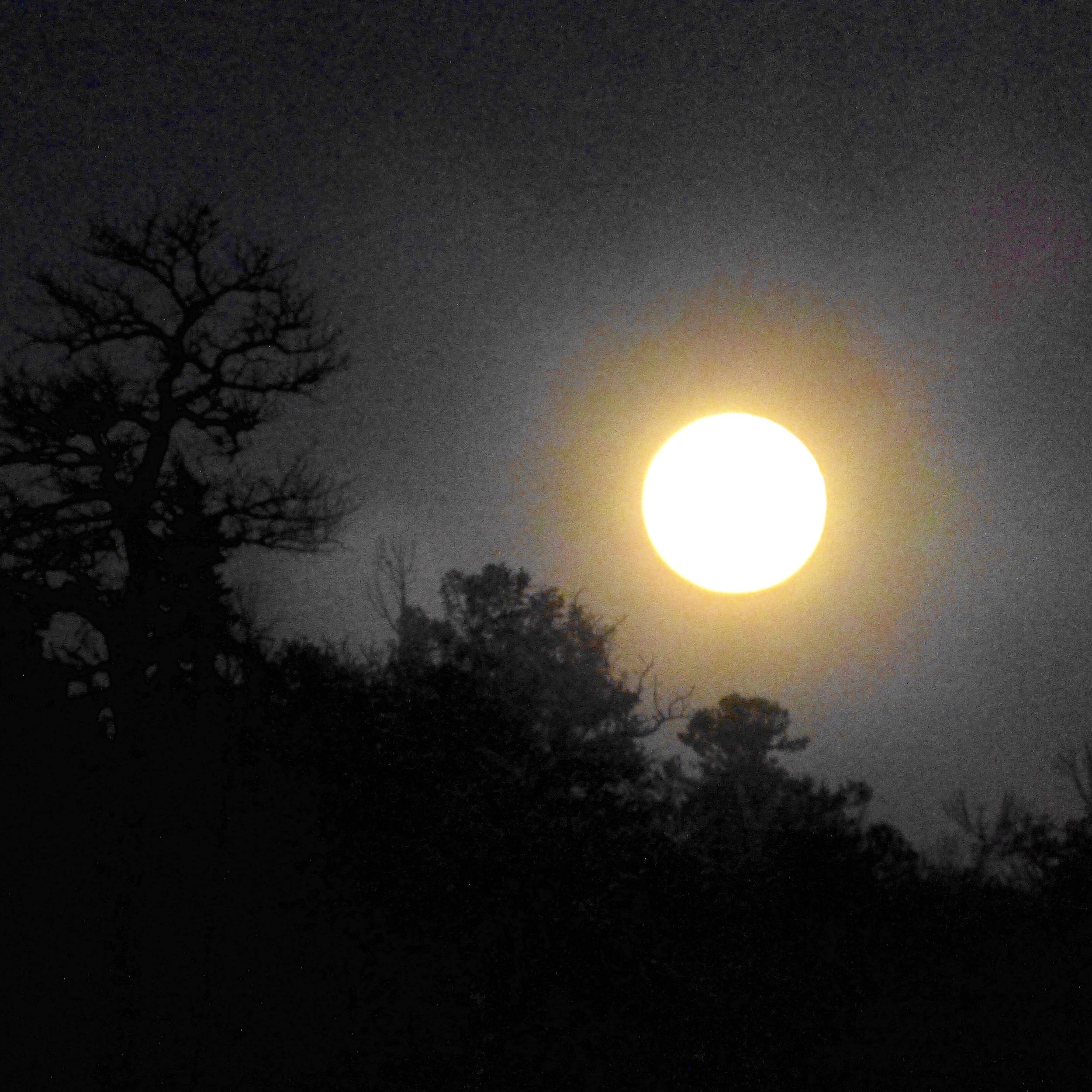 Moonrise overthe ridge