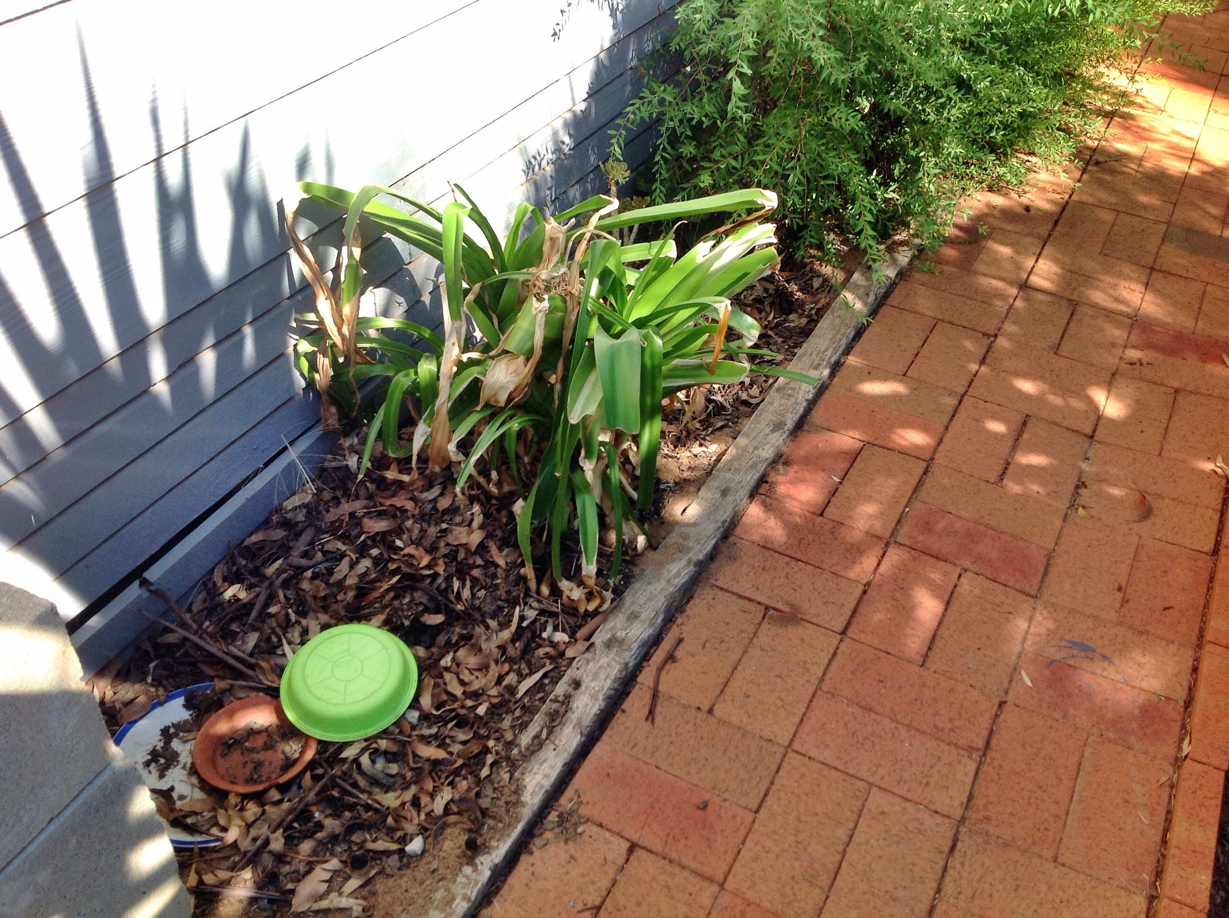 This garden area not only restricts access to the subfloor, but the plants and decaying organic matter is like a billboard inviting the termites in!
