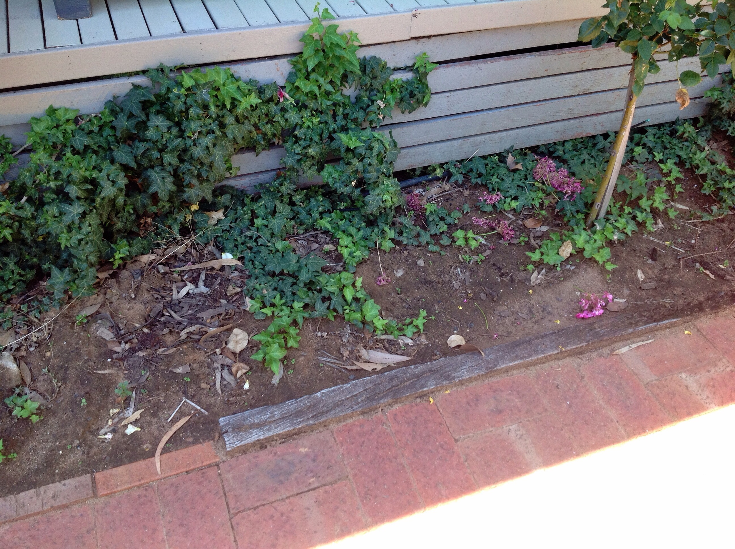Not only do the plants against the building compromise the building, but having the timber in the garden makes a great appetizer for the termites before they make it inside.