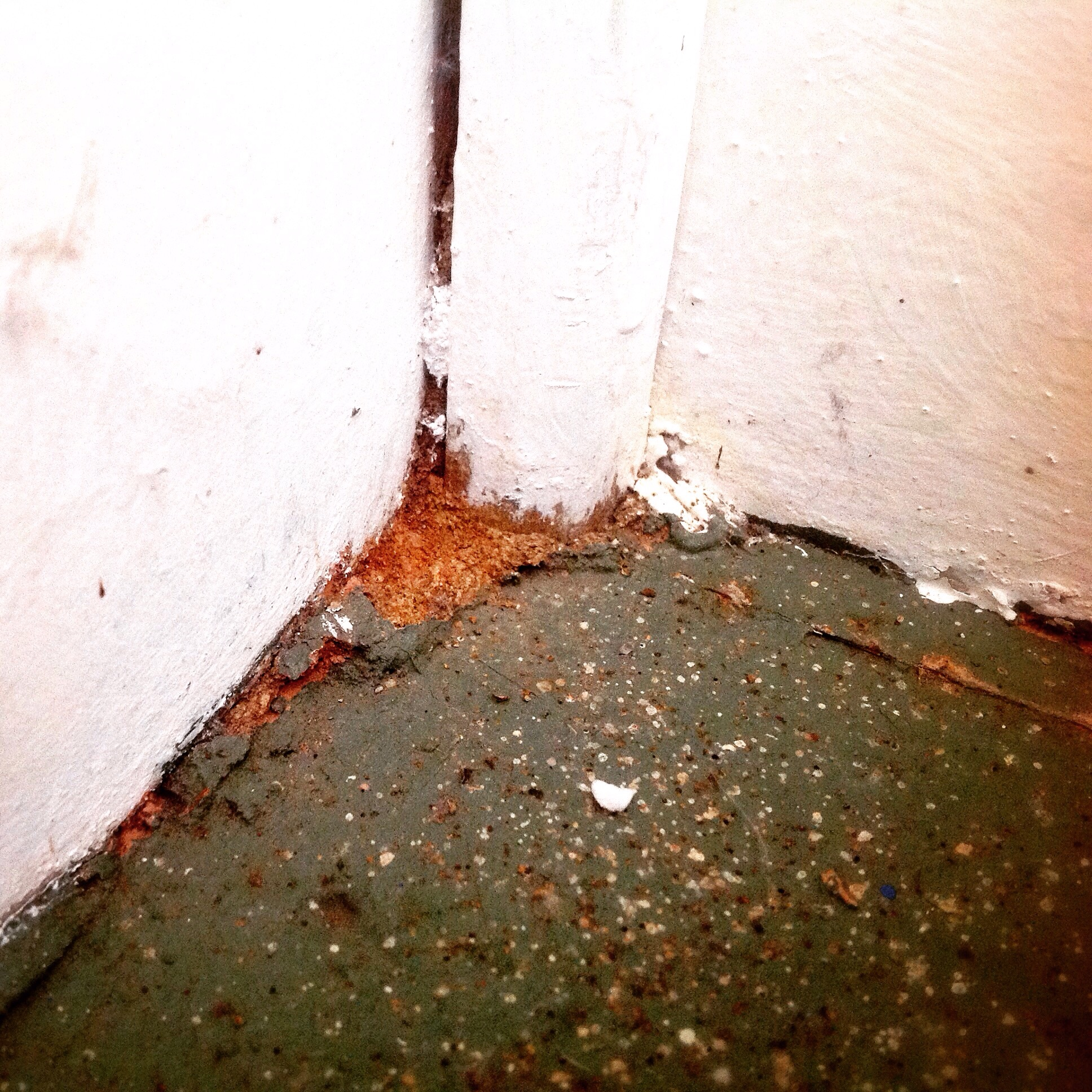 The Termite mudding is clearly visible on this property on the Central Coast, that is, after you remove the paint!