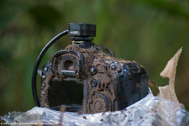 Termites infested this camera. Photo Copywright Jeff Cremer.