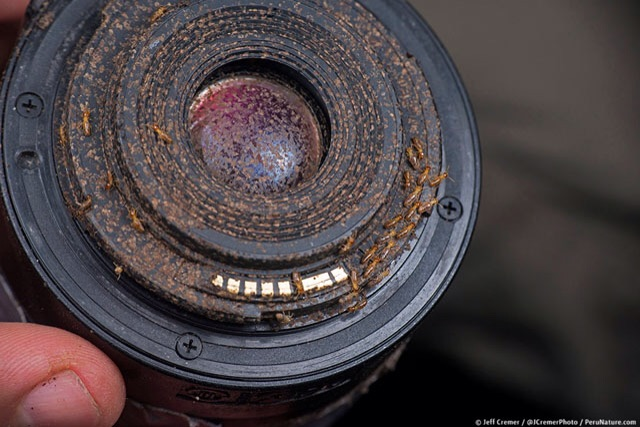 A sad sight for any photography lover. Termites all over the lens, effectively destroying the optics!