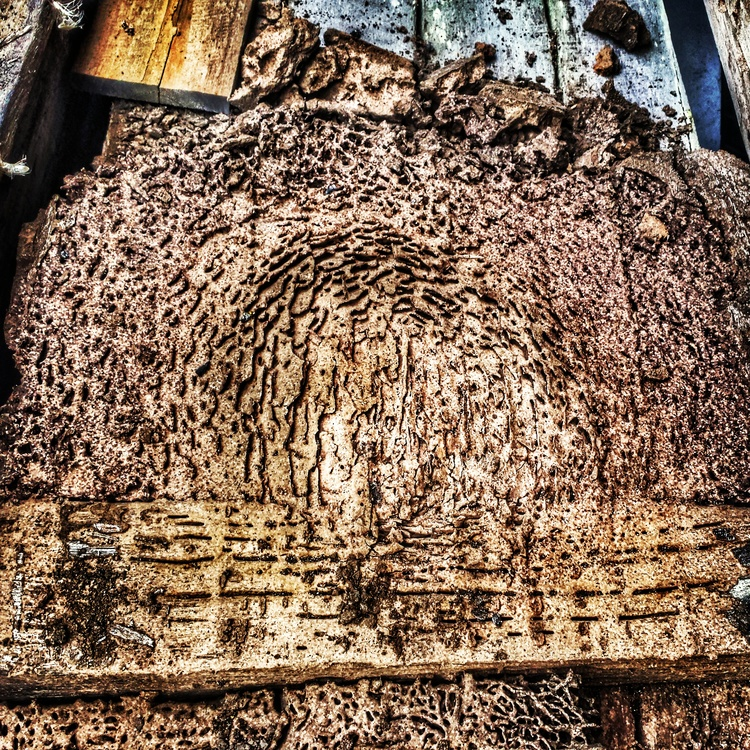 Termite Sub Nest in stored timber.   This home in Wyong had termites infesting it, and the cause was discovered when a pile of stored timber was moved. They had infested it and made themselves a new home! They were promptly eradicated, never to cause a problem again!