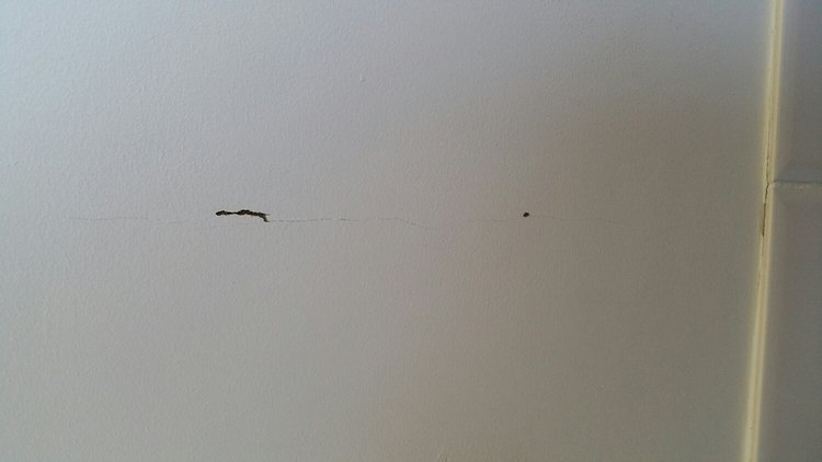 Cracking in walls can be a sign that something sinister is happening behind the wall. The mud spots confirm that it's termites.