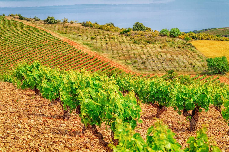 Vineyard Patterns