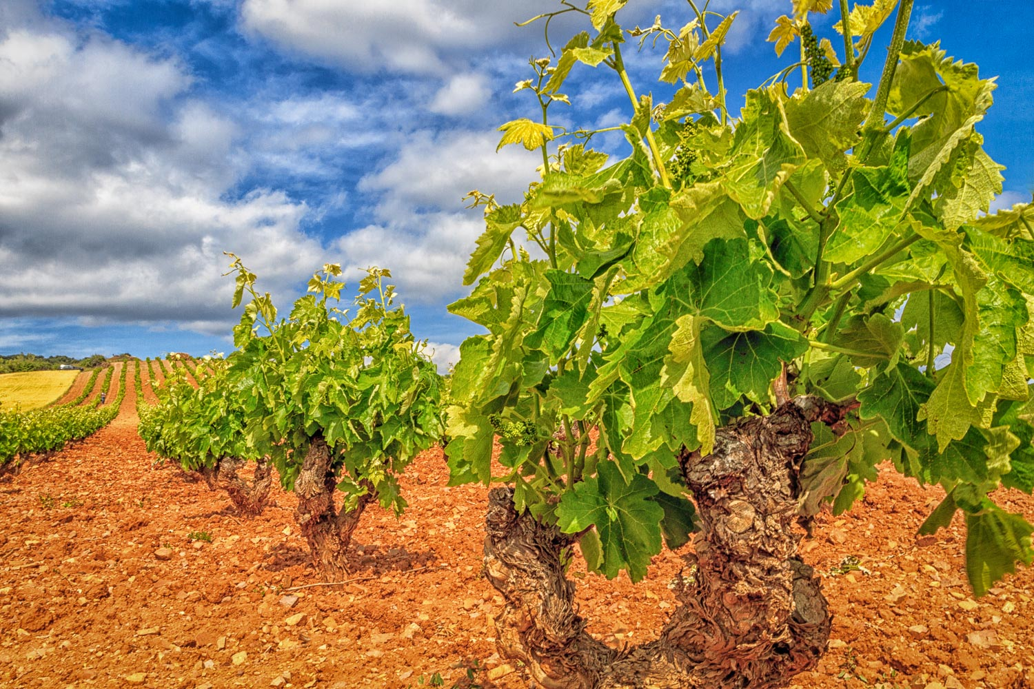 Vines and Clouds