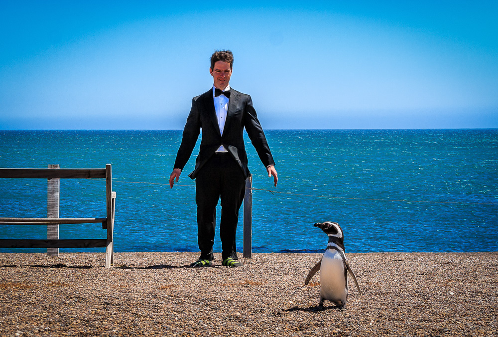 Walking the Penguin Walk