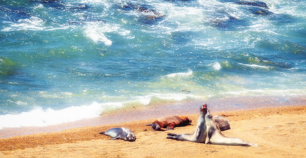 Singing Seals