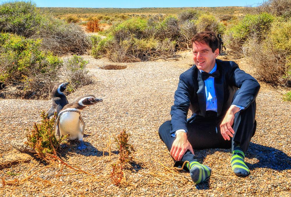 The Penguin Suit