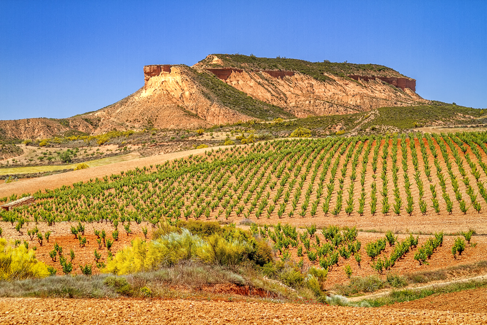 Cariñena countryside