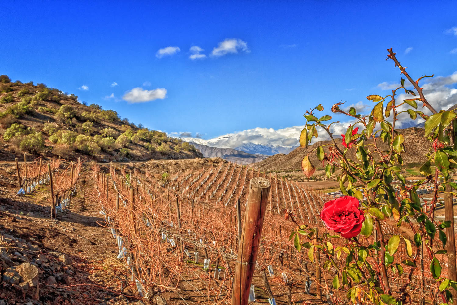 Vineyards in the foothills of the Andes