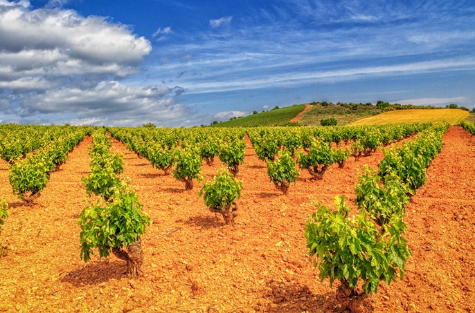 Quality wine now comes from the vineyards of Cariñena, Spain (Photo: (c) Lyn Farmer)