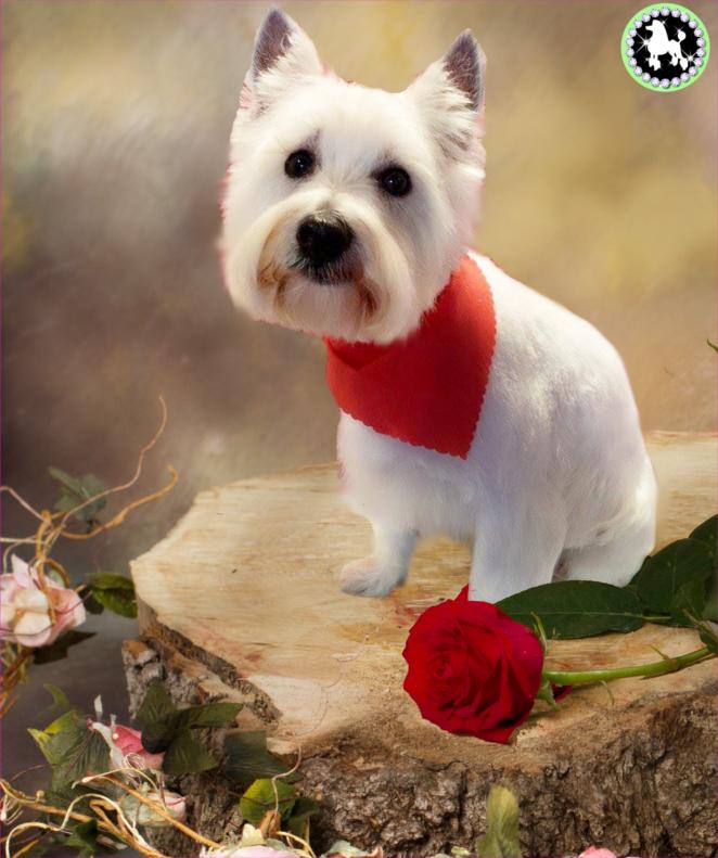 buddy lindsay smith valentine.jpg