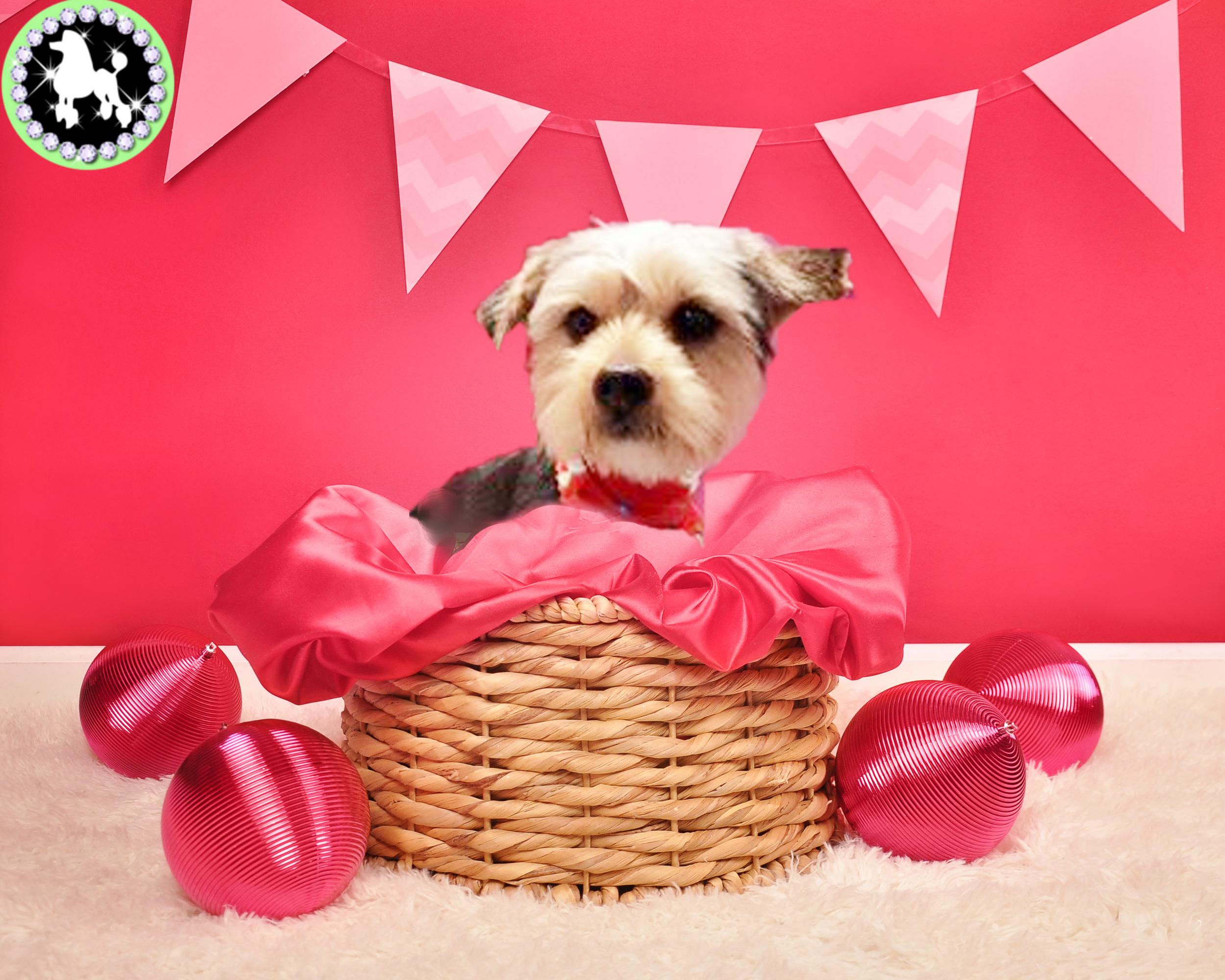 Valentine Molly.jpg