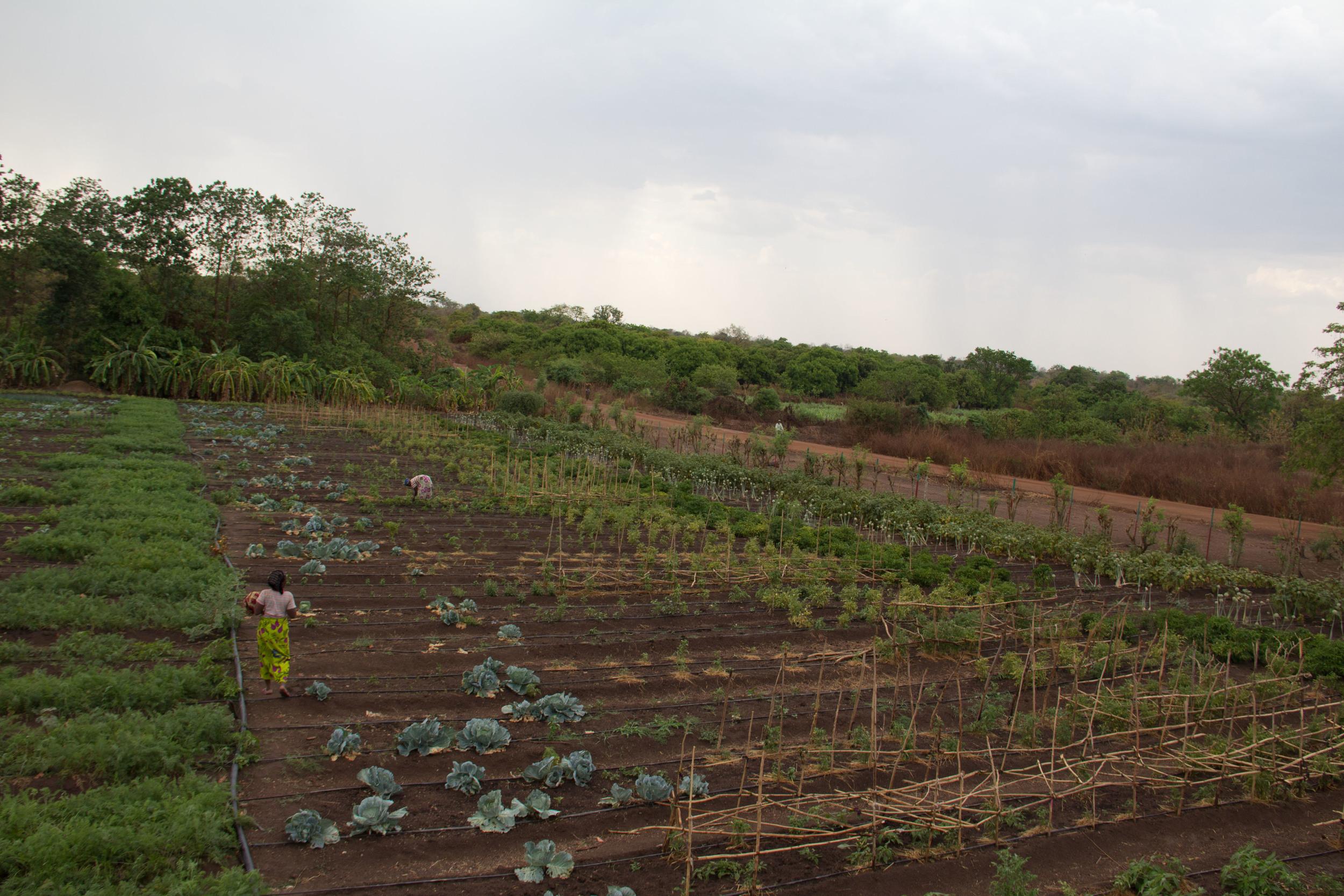 Solar Market Garden