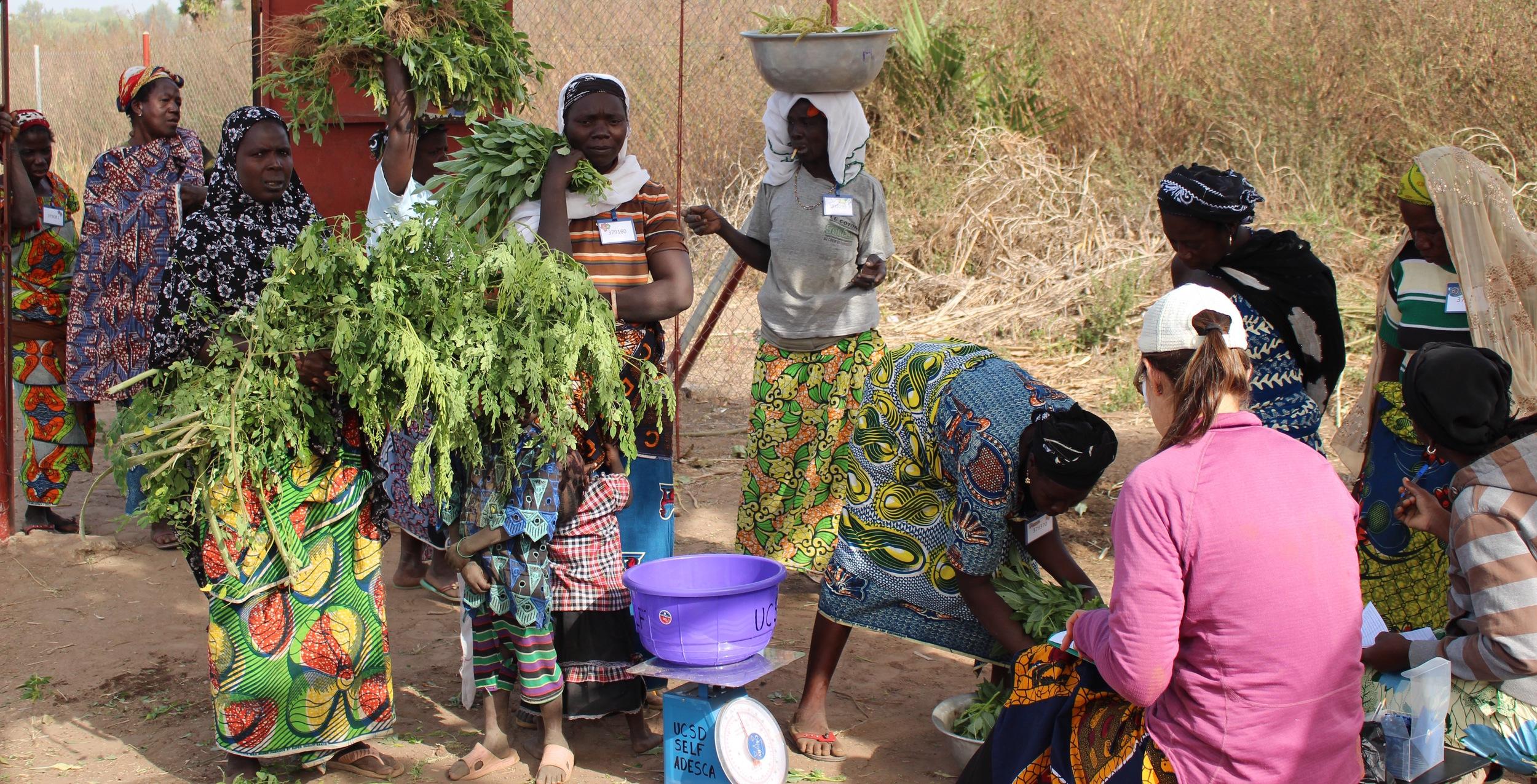 Garden Monitoring in Benin